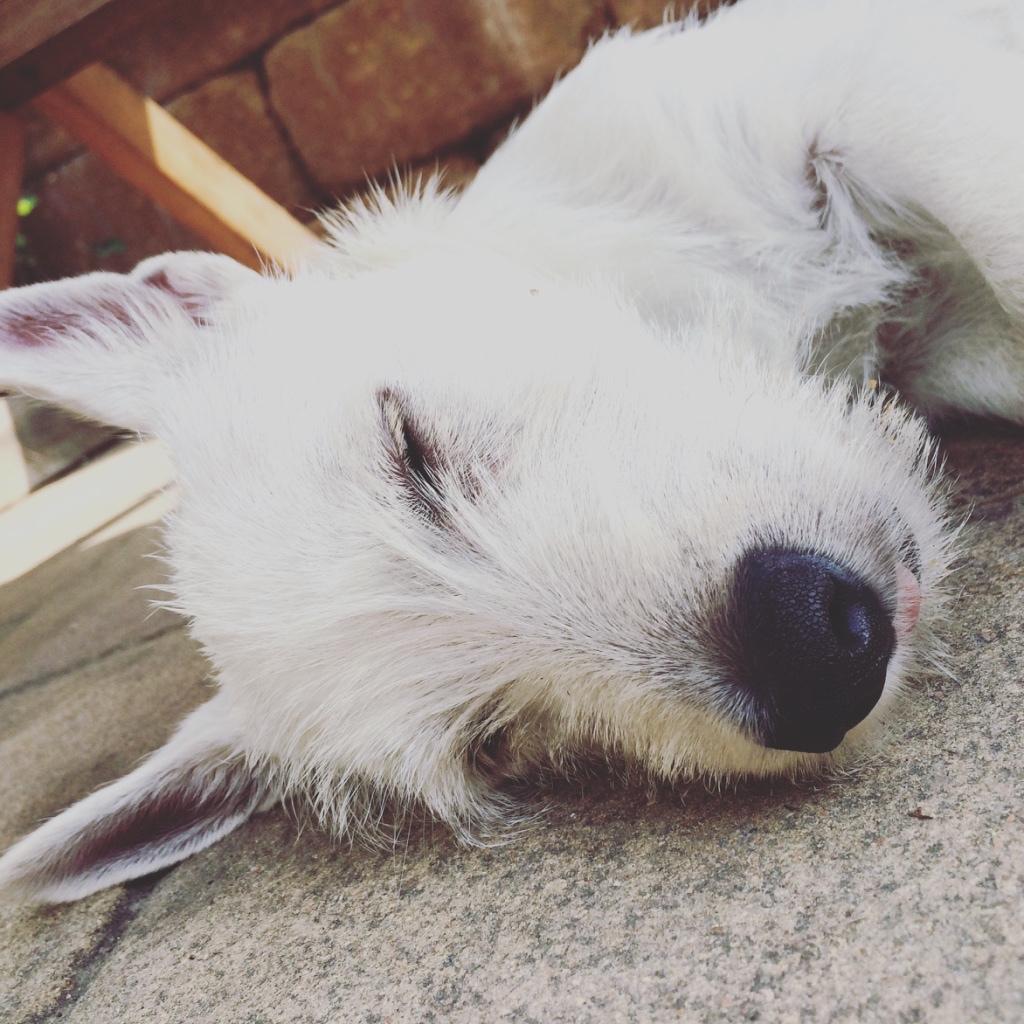 Lola schläft