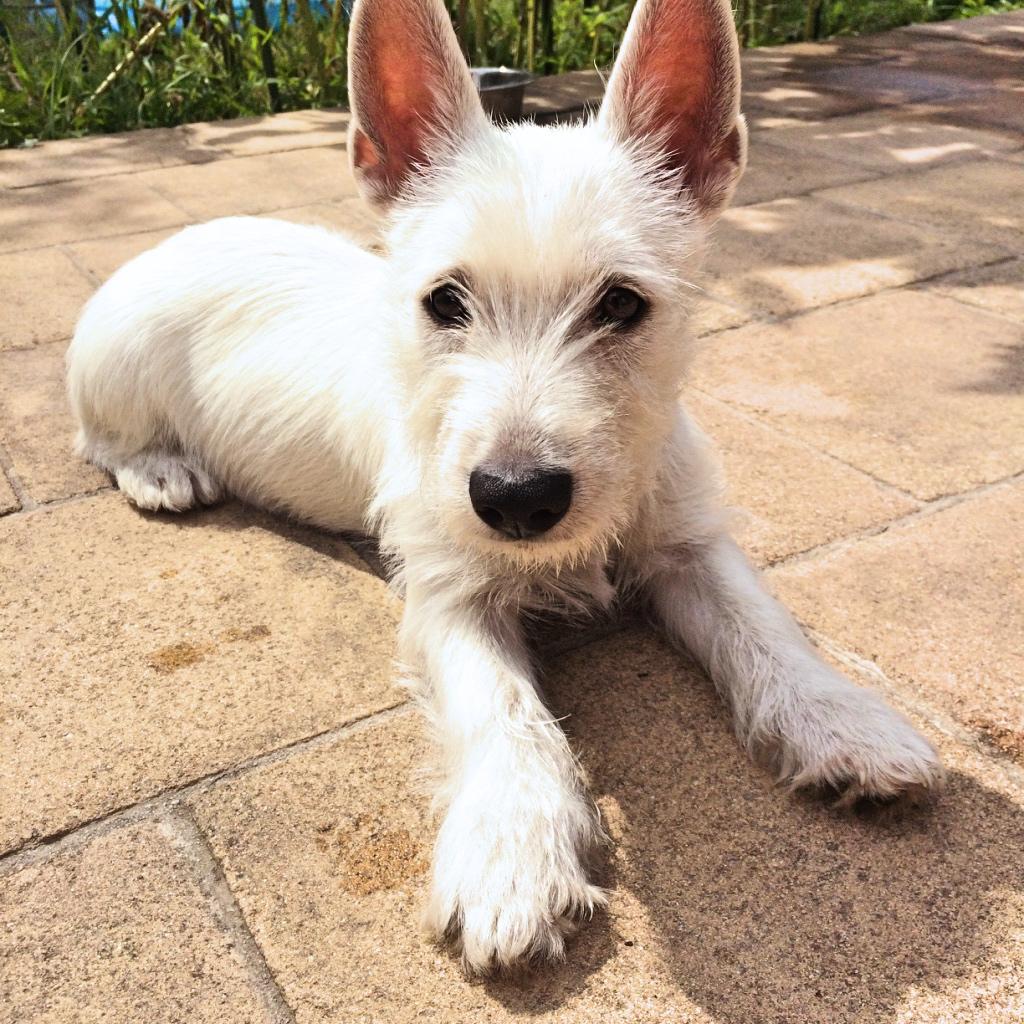 Lola sitzt auf Terrasse