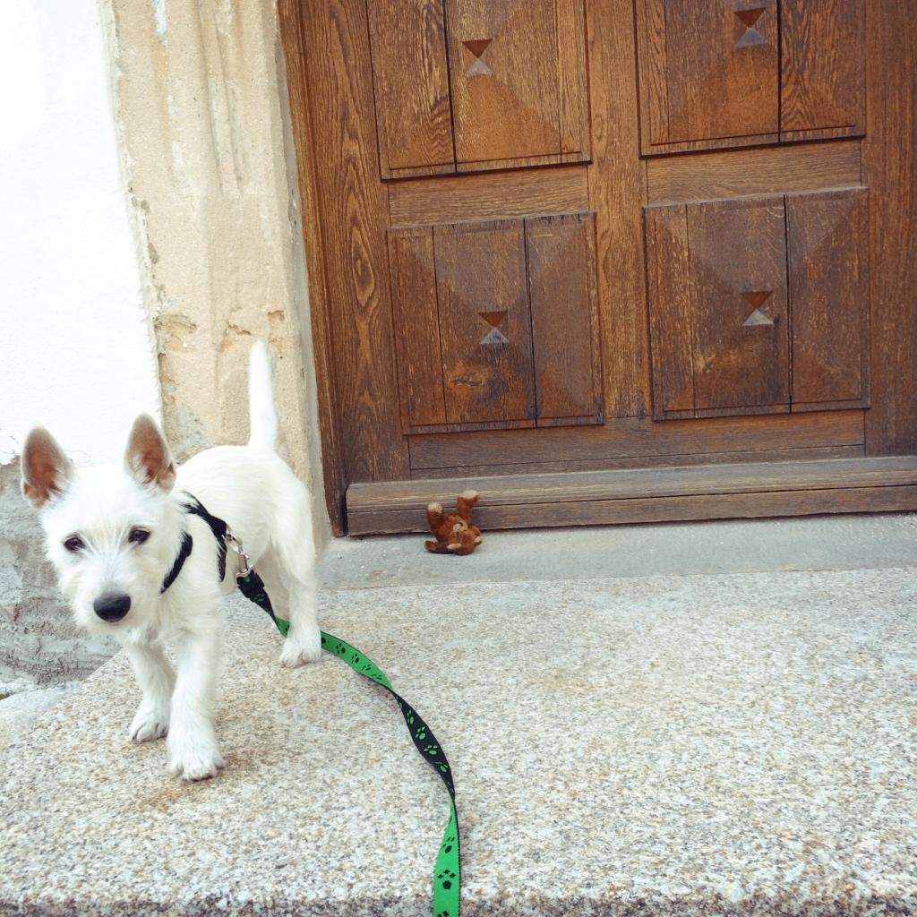 Lola vor der Tür